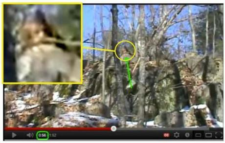 Great Bigfoot photo from Ontario, Canada.