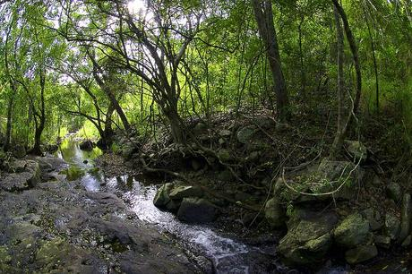 importance of tropical rainforests environmental sciences essay Logging the human impact on the amazon rainforest has been grossly underestimated according to an international team of researchers from brazil and the uk, led by lancaster university.