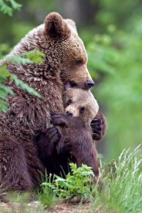 You don't mess with a mama bear.