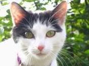 Kitty's Conundrum Short Story)