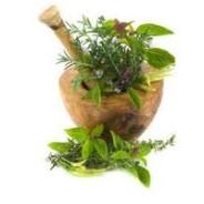 Natural Herbs that Aid in Memory Improvement