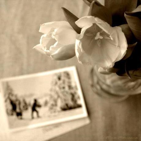 Still Life Photography - Snail mail &