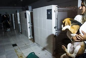 the evils of cosmetic animal testing essay Research essay sample on animal testing in the cosmetic industry custom essay writing animal animals companies human.