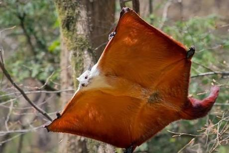 The World's Top 10 Most Unusual Flying Animals - Paperblog