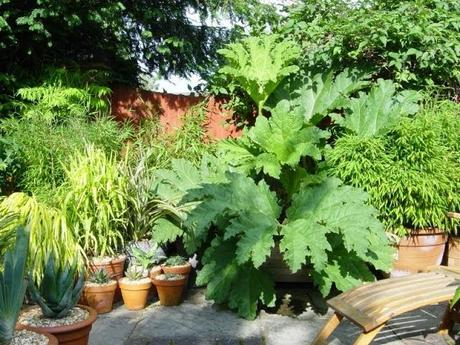 The Potted Life of a Gunnera