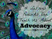 Lessons Peacocks Teach About Advocacy