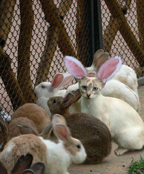 The World's Top 10 Best Animal Imposters