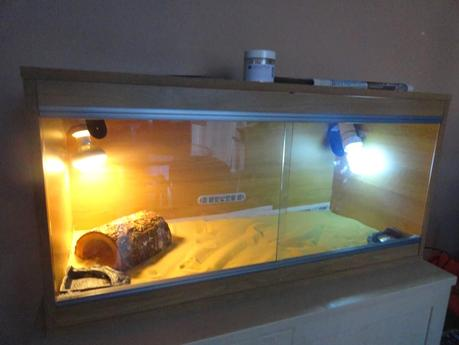 Project Reptile Vivarium
