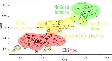 The X axis is face size, from chimp-like (left) to human-like (right). The Y axis is brain size, from chimp-like (bottom) to human-like (top)