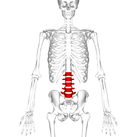 Spinal Movements: How to Keep Your Spine Safe