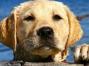 Pets Best Breeds 2013