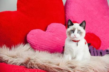 Photos: Valentine's Day Cats