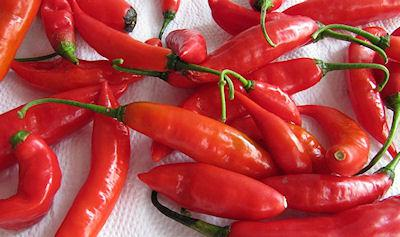 Can Eating Too Much Spicy Food Kill You?