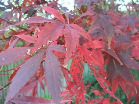 Foliage – November 2011
