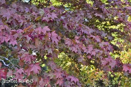 In search of autumnal colour