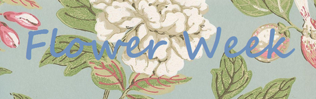 Flower Week - Firenza Floral Design