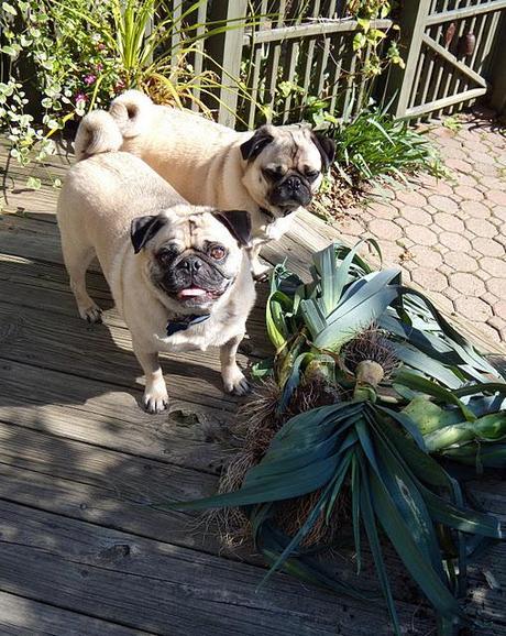 Fall Gardening with Buddy