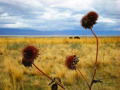 Wordless Wednesdays: Antelope Island
