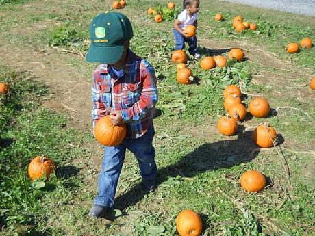 Fall Tradition - The Pumpkin Patch (WW)