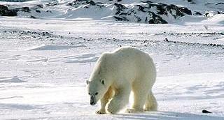 Top-Winter-Destinations-Svalbard