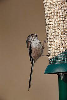 Feed the birds, NO pence a bag.