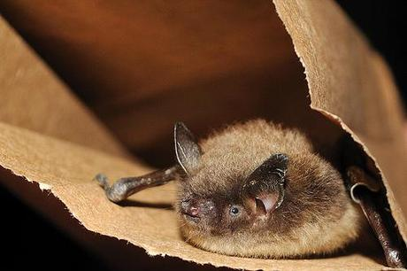 Fungus to blame for bat casualties