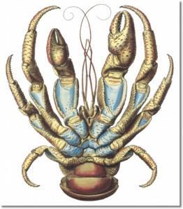 Ibrahimovic's Crab Walk