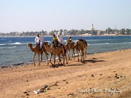 Diving trip to Egypt postponed