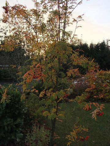 Buttery Autumn colour