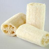 Natural bath sponge - growing luffa cylindrica