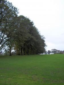 Inverleith Park, space to Breathe