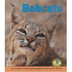 Bobcats:  The Writing Process, Learning from Real Life