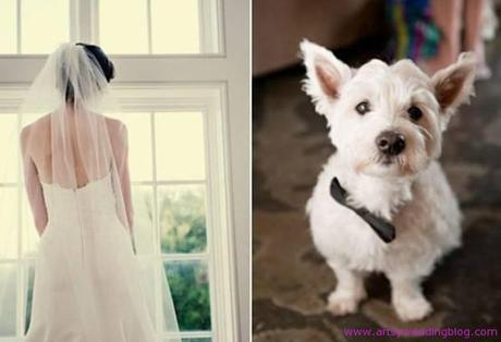 Invite Your Beloved Pet to Your wedding