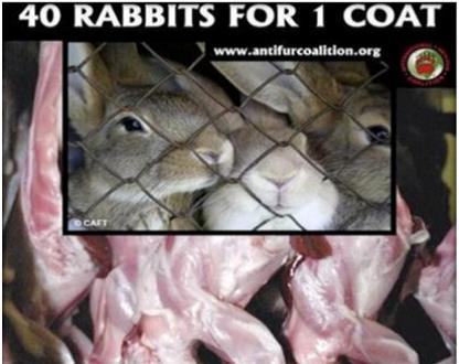40 rabbits