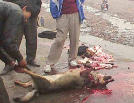 dog being skinned
