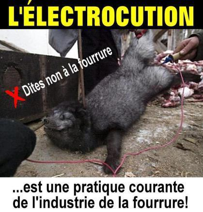 anal electrocution