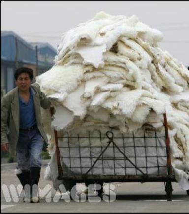 Thousands of pelts