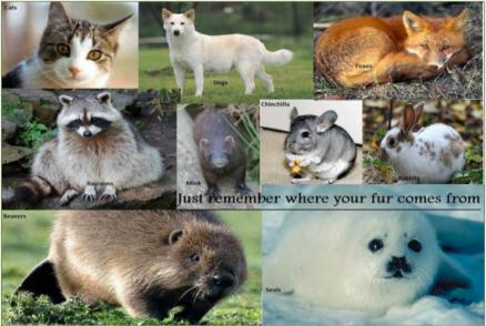 furbearing animals