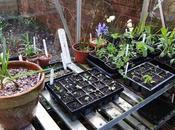 Greenhouse Year February 2014