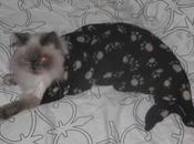 World's Best Images Mermaid Cats
