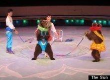 Animal Cruelty In North Korean Circuses, Where Bears Roller Skate etc. PETA States This Can Only To Be Learned Through Torture