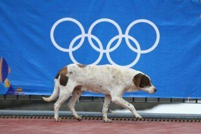 Russia:  Helping the Sochi Strays !