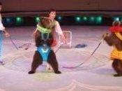 Animal Cruelty North Korean Circuses
