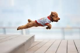 Can You Train An Older Dog Not To Jump