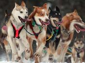 2014 Iditarod Begins Saturday!