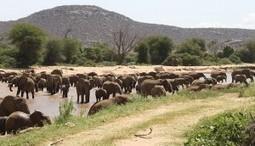 Encourage Construction of Wildlife Crossings