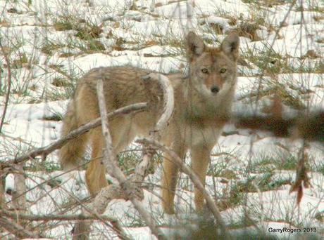 Banning Wildlife Killing Contests
