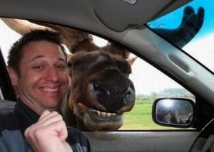 moose car selfie