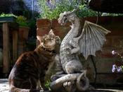 World's Best Images Cats Dragons