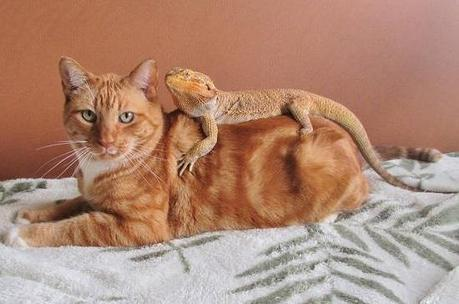 The World's Top 10 Best Images of Cats and Dragons